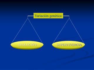 Variaci�n gen�tica