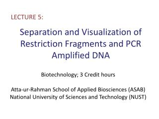 Separation and Visualization of Restriction Fragments and PCR Amplified DNA