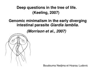 Genomic minimalism in the early diverging intestinal parasite  Giardia lamblia.