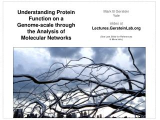 Understanding Protein Function on a  Genome-scale through the Analysis of Molecular Networks