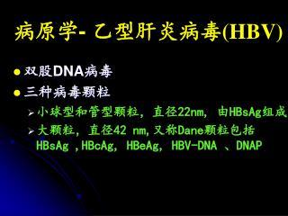 病原学 -  乙型肝炎病毒 (HBV)