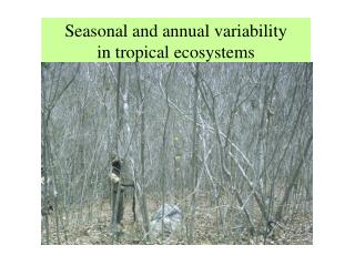 Seasonal and annual variability  in tropical ecosystems