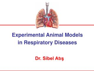 Experimental Animal  Model s in Respiratory Diseases