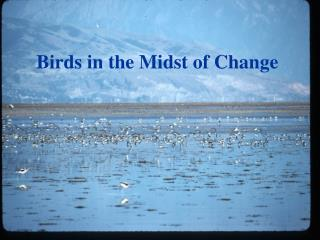 Birds in the Midst of Change