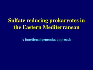 Sulfate reducing prokaryotes in the Eastern Mediterranean A functional genomics approach