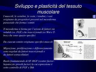 Sviluppo e plasticità del tessuto muscolare