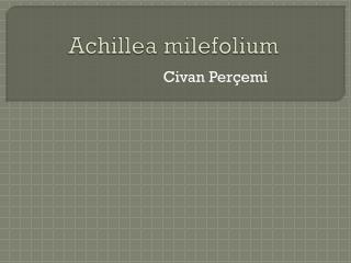 Achillea milefolium