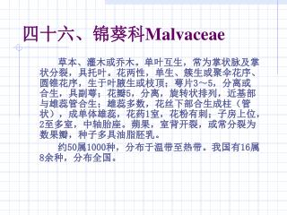 四十六、锦葵科 Malvaceae