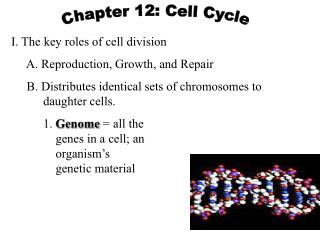 I. The key roles of cell division      A. Reproduction, Growth, and Repair
