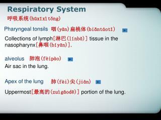 Respiratory System ???? (h?x?x�t?ng)