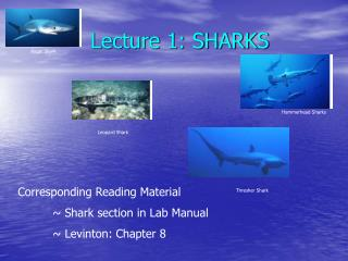 Lecture 1: SHARKS
