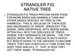STRANGLER FIG NATIVE TREE