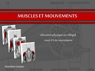 MUSCLES ET MOUVEMENTS
