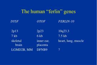 """The human """"ferlin"""" genes"""