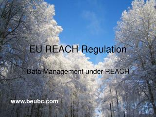 EU REACH Regulation