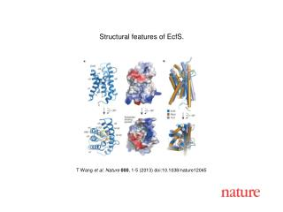 T Wang  et al. Nature  000 , 1-5 (2013) doi:10.1038/nature12045
