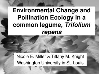 Environmental Change and Pollination Ecology in a common legume,  Trifolium repens
