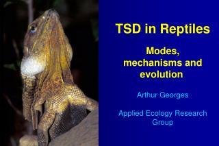 TSD in Reptiles