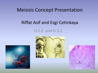 Meiosis Concept Presentation Riffat Asif  and  Ezgi Cetinkaya