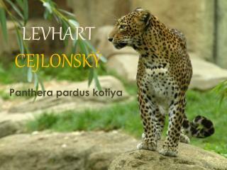 L EVHART  CEJLONSKÝ