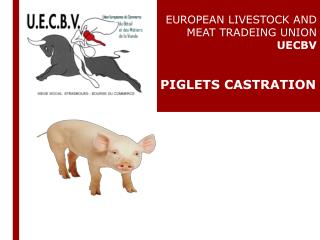 EUROPEAN  LIVESTOCK AND MEAT TRADEING UNION   UECBV PIGLETS CASTRATION