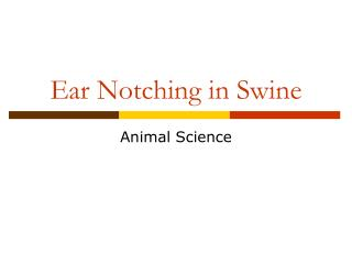 Ear Notching in Swine