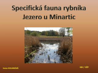 Specifická fauna rybníka  Jezero u  Minartic
