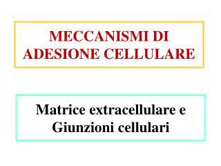Matrice extracellulare e  Giunzioni cellulari