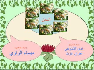 إشراف الدكتورة ميساء الراوي
