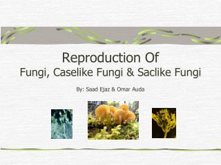 Reproduction Of  Fungi, Caselike Fungi & Saclike Fungi