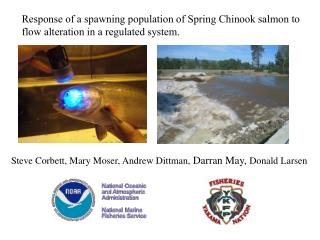 Response of a spawning population of Spring Chinook salmon to
