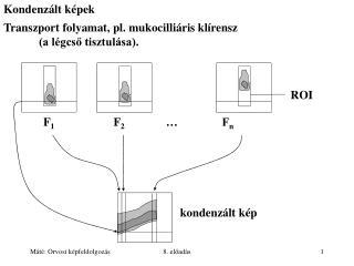 Kondenzált képek Transzport folyamat, pl. mukocilliáris klírensz  (a légcső tisztulása).