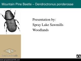Mountain Pine Beetle – Dendroctronus ponderosae