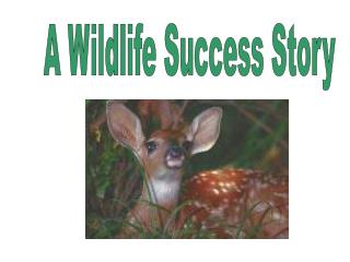 A Wildlife Success Story
