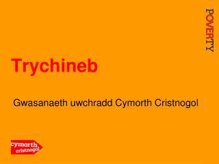 Trychineb