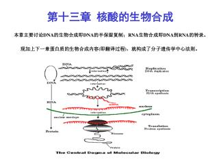第一节     DNA 的复制与修复 研究 DNA 复制的目的就是要了解三个问题。 第一、子代 DNA 为什么能够直接地获得新 DNA 的遗传信息? 第二、复制是怎样进行的