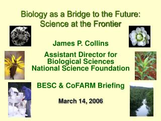 James P. Collins Assistant Director for Biological Sciences National Science Foundation