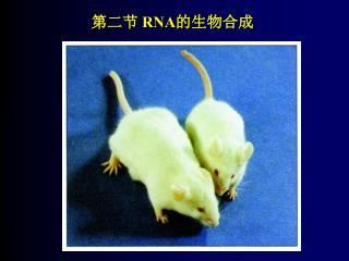 第二节  RNA 的生物合成