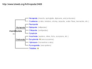 tolweb/Arthropoda/2469