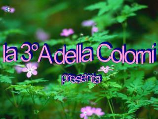 la 3°A della Colorni