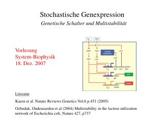 Stochastische Genexpression