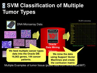 Multiple Examples of tumor tissue (public data from Whitehead/MIT)