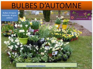 BULBES D'AUTOMNE