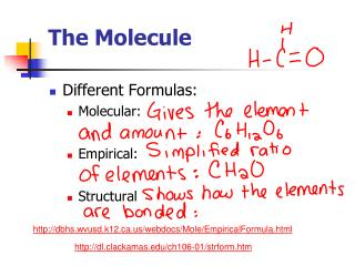 The Molecule