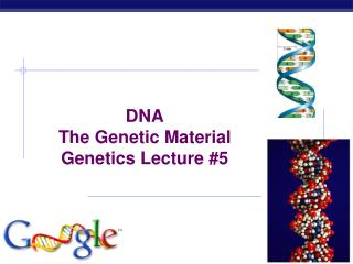 DNA The Genetic Material Genetics Lecture #5