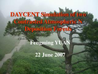 DAYCENT Simulation of two Contrasted Atmospheric N Deposition Forests