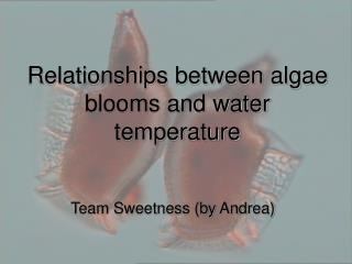 Team Sweetness (by Andrea)