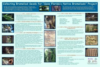 "Collecting Bromeliad Seeds for ""Save Florida's Native Bromeliads"" Project"