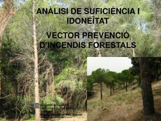 ANÀLISI DE SUFICIÈNCIA I IDONEÏTAT  VECTOR PREVENCIÓ D'INCENDIS FORESTALS