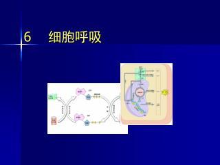 6     细胞呼吸
